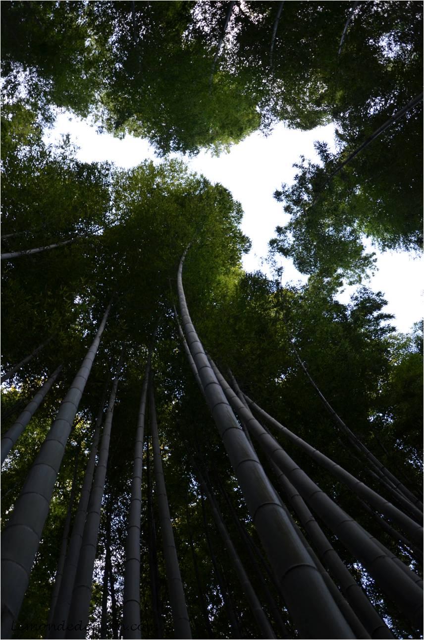 japon jour 3 kyoto arashiyama okochi sanso villa le monde de nath. Black Bedroom Furniture Sets. Home Design Ideas